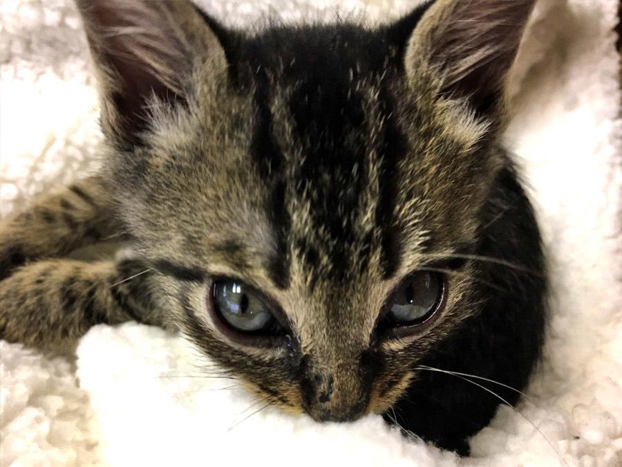 2017-12-11_kitty-cat_huku2.jpg