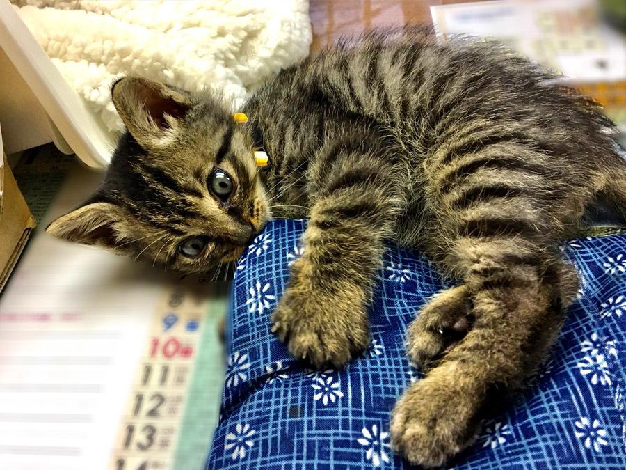 2017-12-11_kitty-cat_huku3.jpg