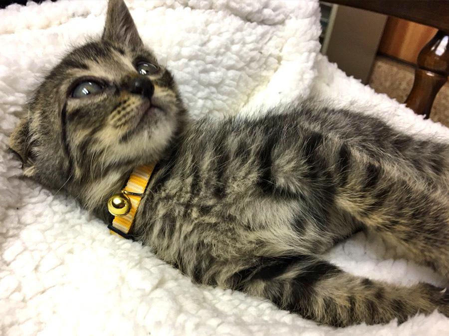 2017-12-11_kitty-cat_huku5.jpg