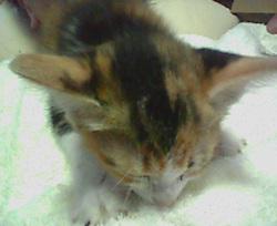 eijaikaya-2009-08-11_satooya-quest2.jpg