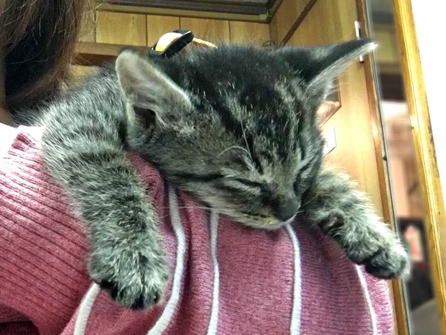 2017-12-11_kitty-cat_huku4.jpg