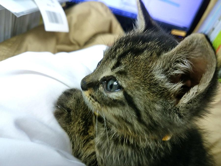 2017-12-11_kitty-cat_huku9.jpg
