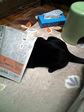 eijaikaya-2007-03-14_FUKI070208.jpg
